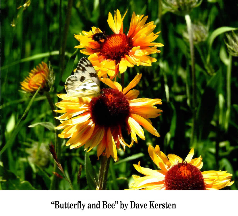 Summer-Photo-Finalist---Butterfly-and-Bee-by-Dave-Kersten